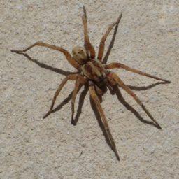 Уничтожение пауков в Волхове